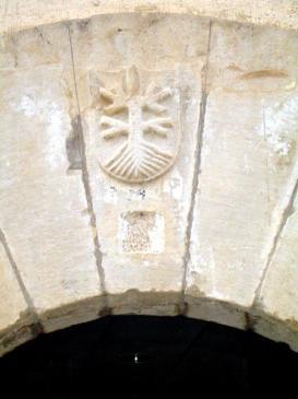 26.07.2007 <strong>Arbre</strong> amb arrels localitzat en una mènsula de l'edifici de la biblioteca pública de Tàrrega.            Tàrrega. Al costat de la biblioteca pública -  Jordi Bibià