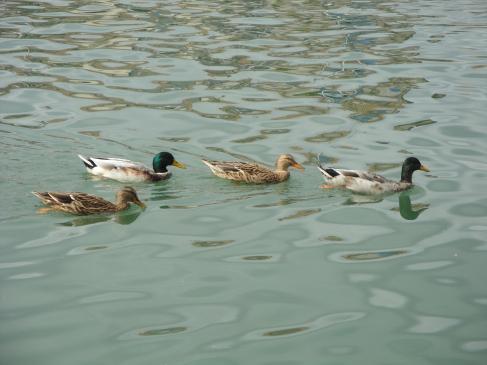 06.10.2009 Passeig en barca d'una família feliç.            Riu Érol    -  Jordi Bibià