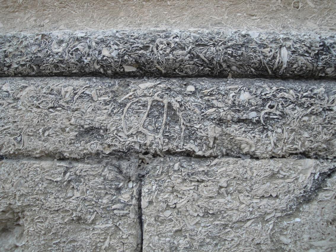 02.10.2009 La majoria dels antics edificis presenten traces força visibles de la sedimentació marina que componen els seus blocs de pedra. El seu tacte i temperatura és diferent a la resta de materials comuns            Montpeller -  Jordi Bibià