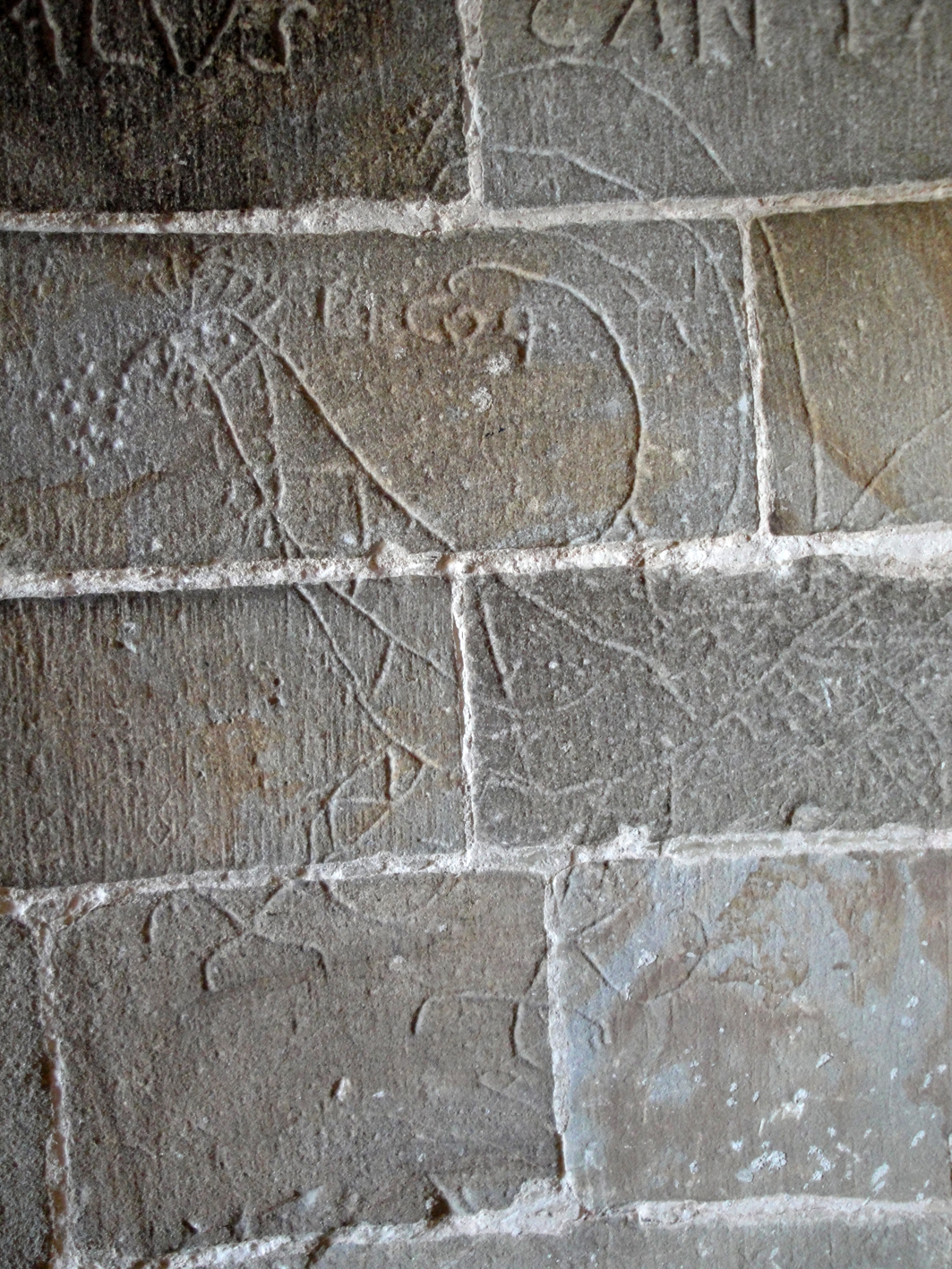 29.07.2018 Gall.  Castell de Foix. -  Jordi Bibià